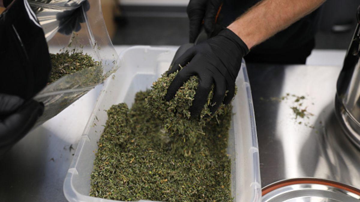 Aprueban en comisiones del Senado uso lúdico de la marihuana