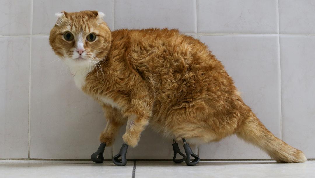 gato congelado siberia