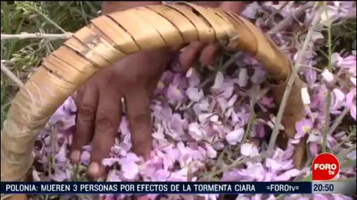Foto: Flor Cuchunuc Única Temporada Cuaresma 12 Febrero 2020