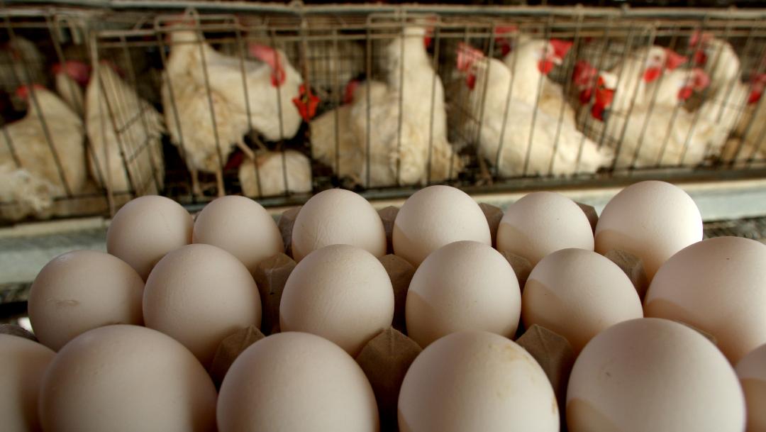 FOTO: China lucha contra gripe aviar, además de coronavirus, el 10 de febrero de 2020