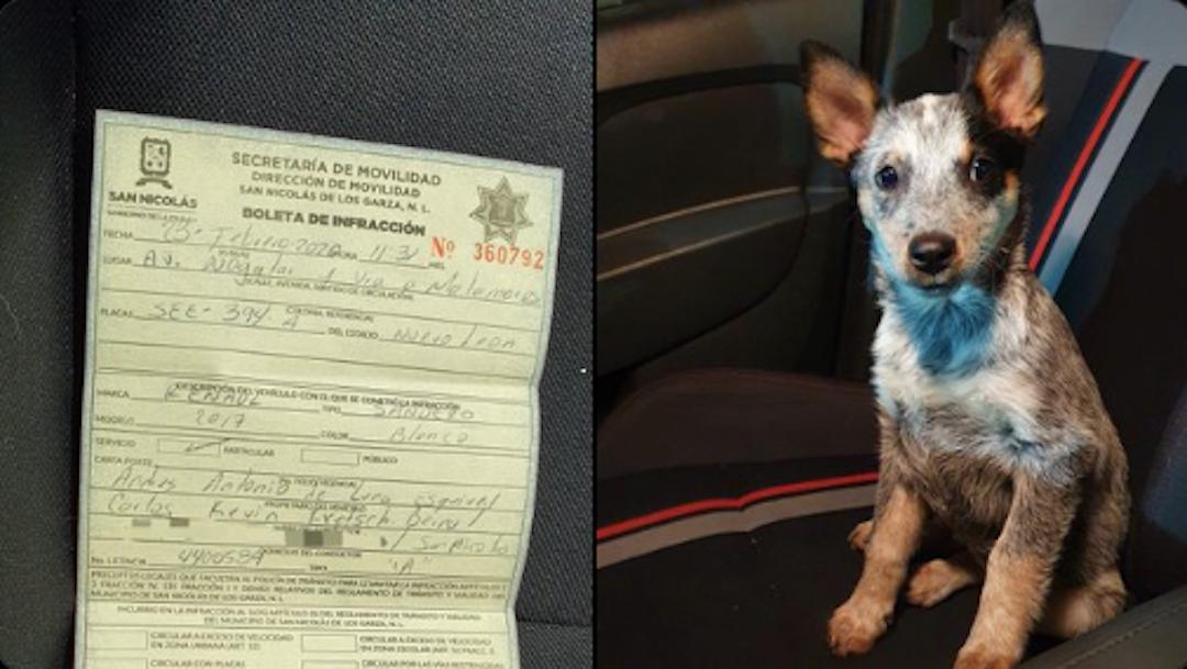 Foto Conductor es multado por traer a un cachorro de copiloto 25 febrero 2020