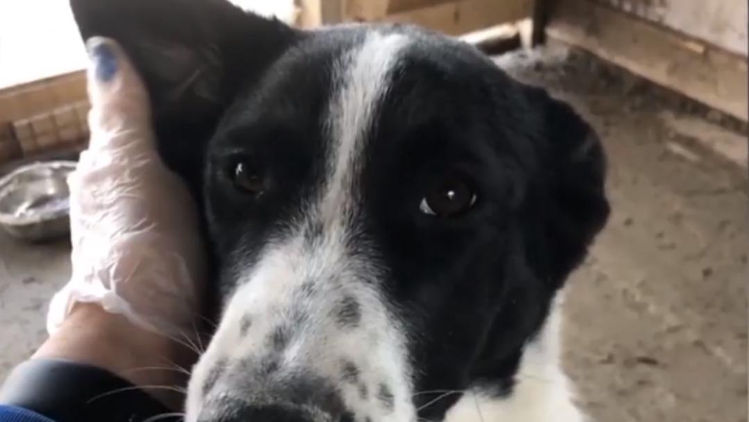 FOTO Adoptan perro en refugio animal y luego se lo comen (Daily Mail)