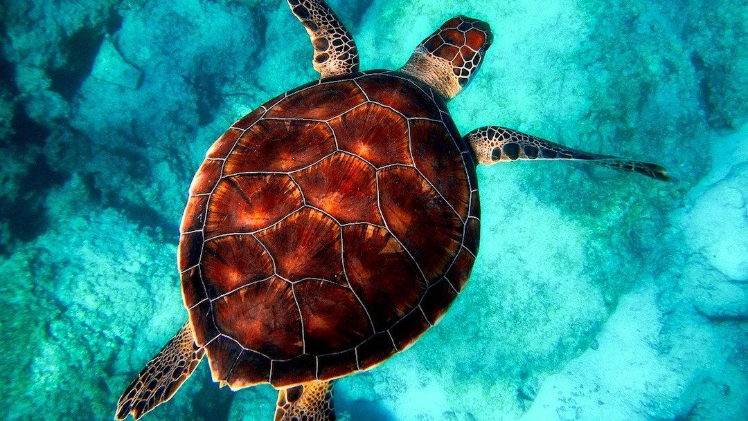 Foto Tortuga Muerta Hilo Pesca 2020