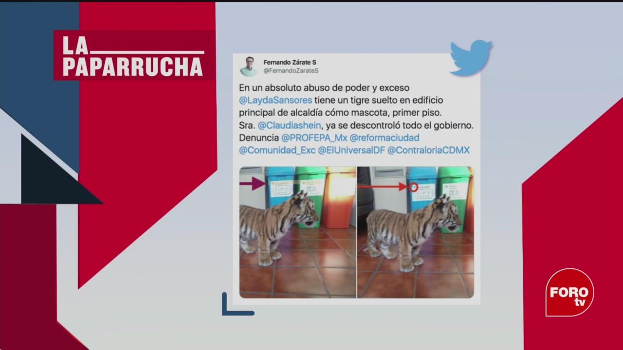 Foto: Tigre Álvaro Obregón Mascota Layda Sansores 19 Febrero 2020