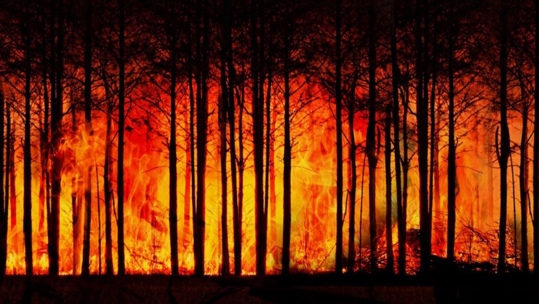 Bosques tropicales ya no pueden retener CO2: estudio