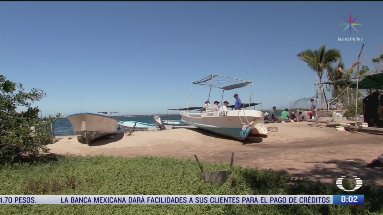 pescadores de el manglito buscan regenerar la biodiversidad del mar