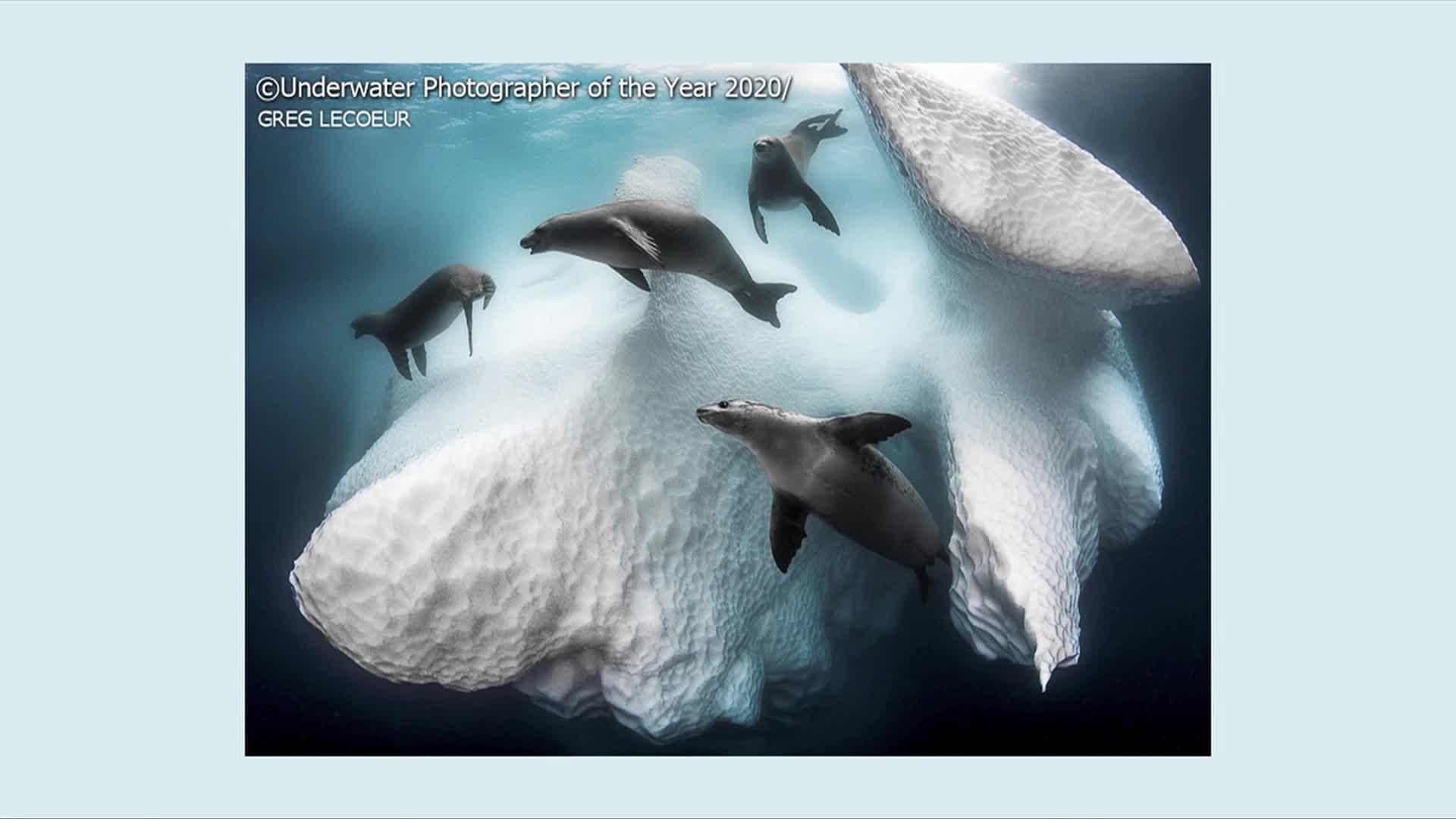 Foto: presentan ganadores del concurso de fotografia submarina en reino unido