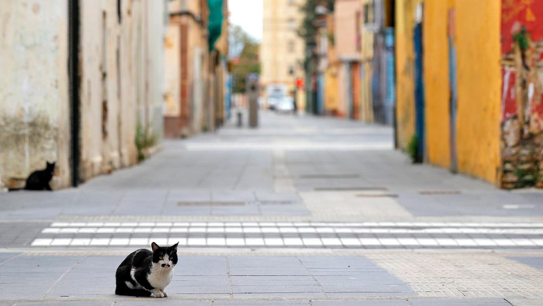gatos coronavirus eeuu nueva york