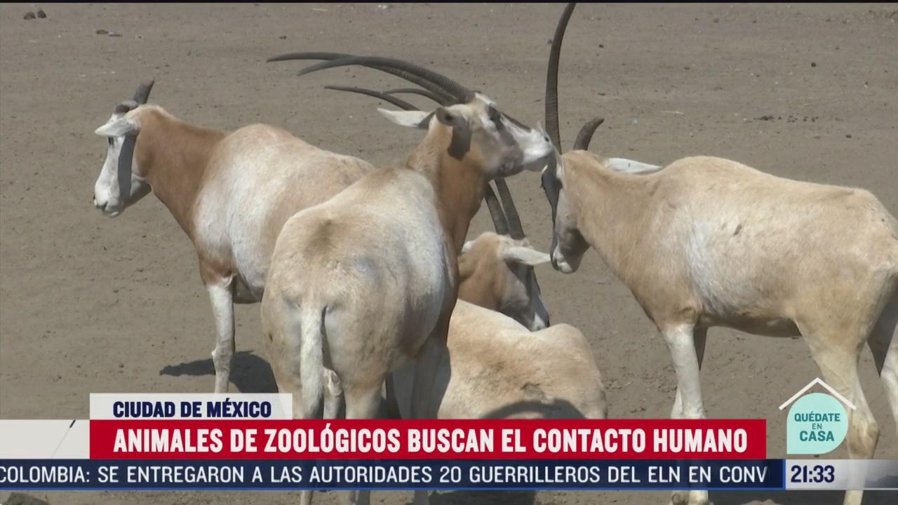 Foto: asi operan los zoologicos en la cdmx ante pandemia 29 Abril 2020