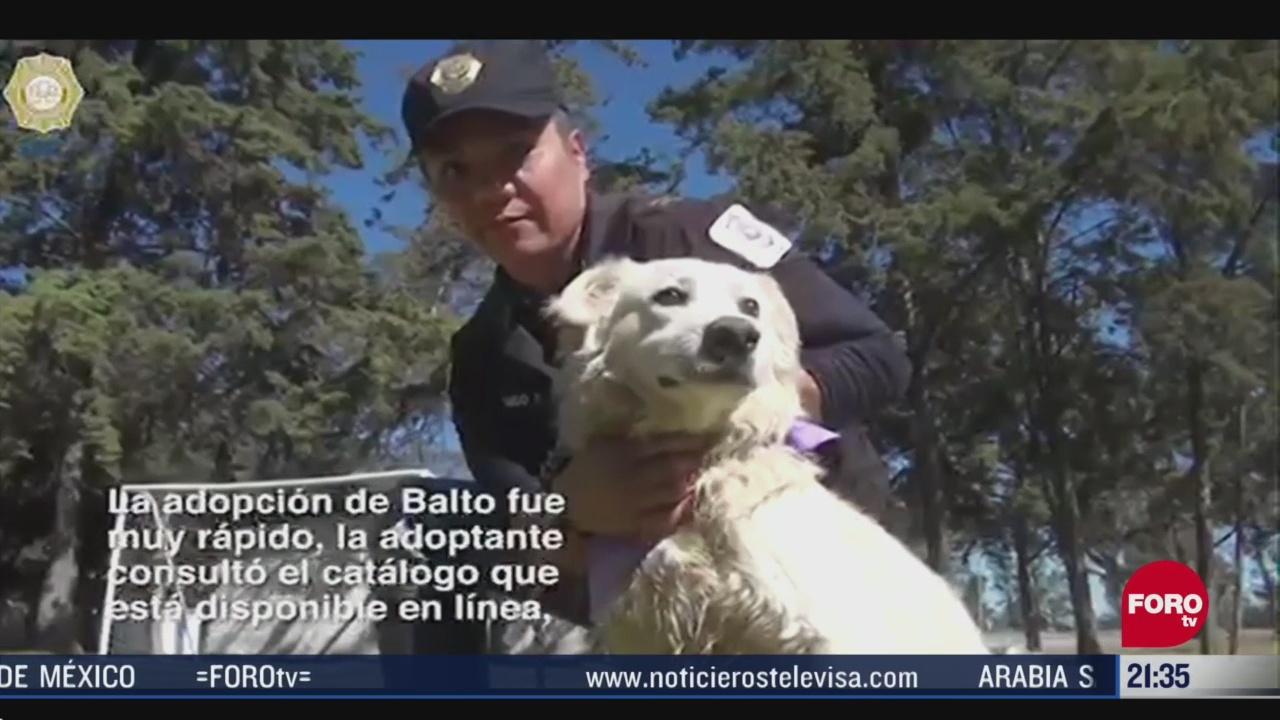 Foto: Adopción De Perritos Gatitos Durante Pandemia En Cdmx 24 Abril 2020