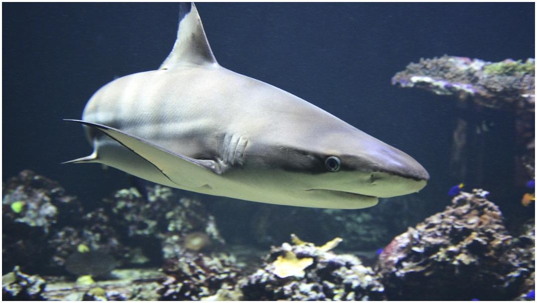 Imagen: Por ataque de tiburón cierran playa de California, 10 de mayo de 2020 (Pixabay)