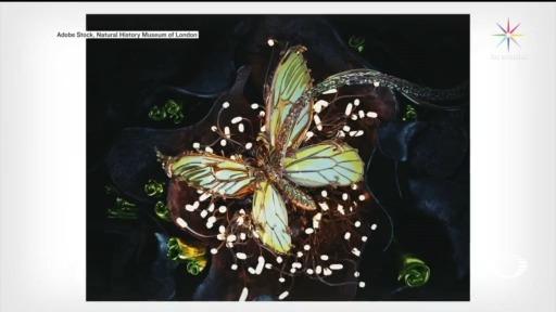 Foto: crean insectos en 3d para coleccion del museo de historia nacional de londres 15 Mayo 2020