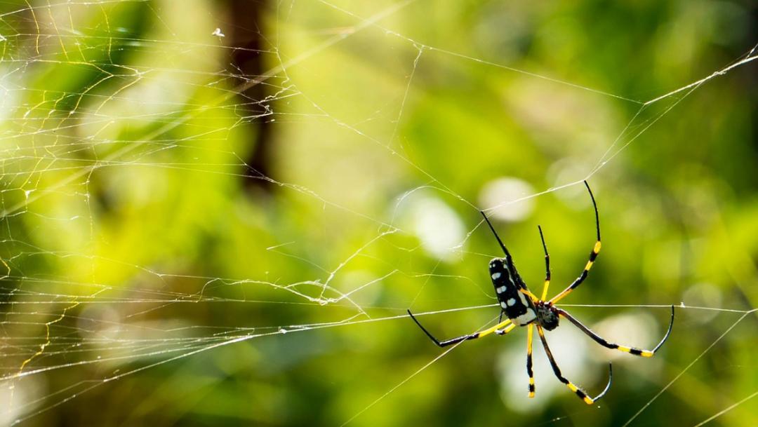 telaraña-de-araña-y-araña-comiendo-mosca