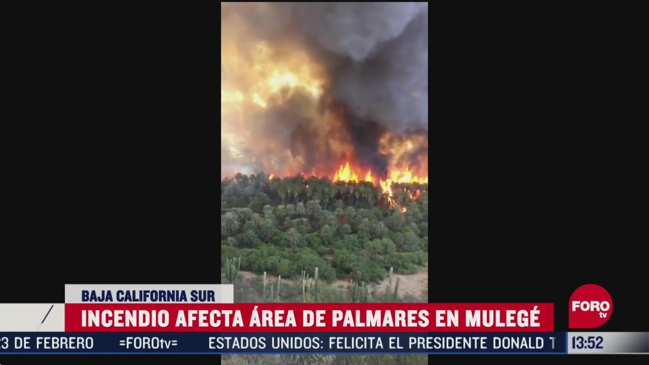 FOTO: fuerte incendio consume zona de palmares en baja california
