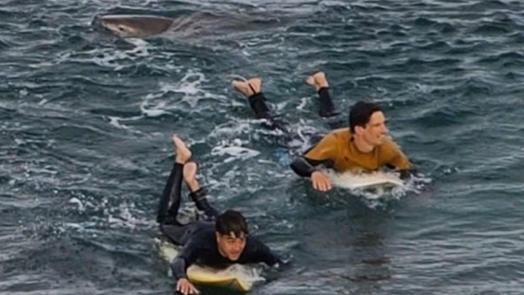Surfista sobrevive a puñetazos al ataque de un tiburón en Australia