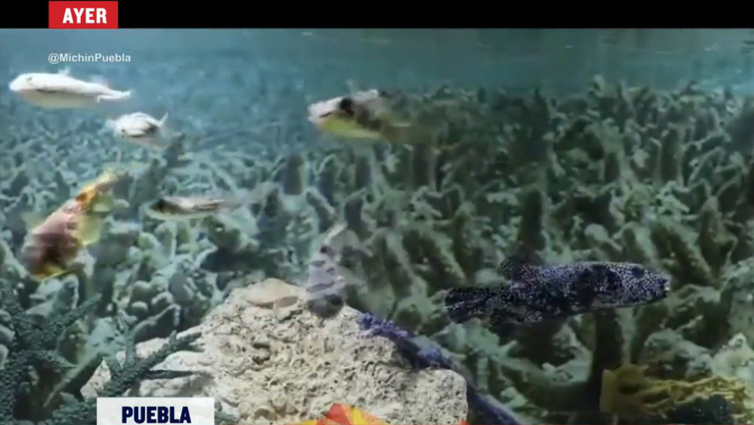 Sismo sacude tanque de peces en acuario, captura de pantalla