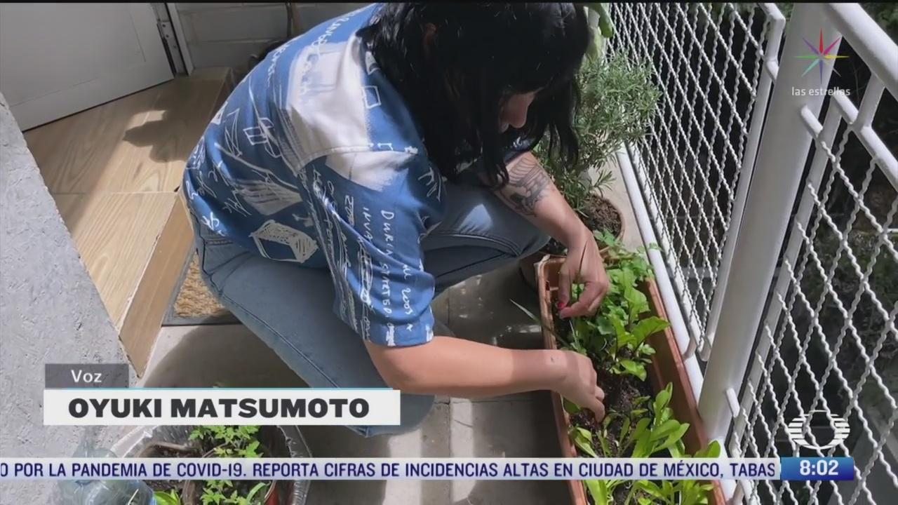 las plantas y su beneficio mental