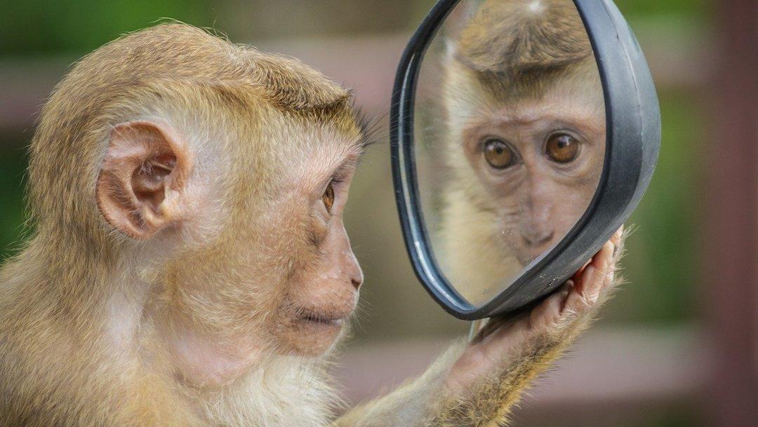 Mono Viéndose Espejo Reflejo Foto