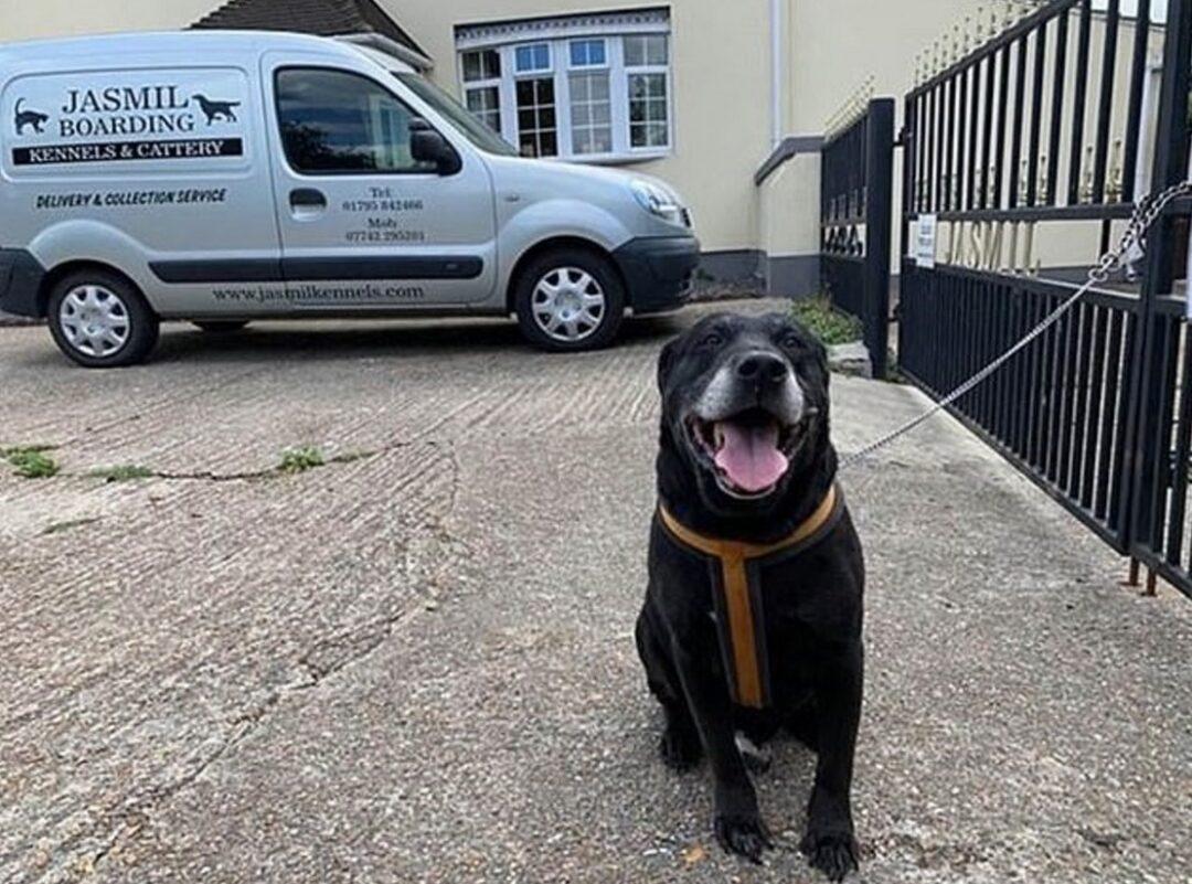 La nota que hizo viral a este perro abandonado en Inglaterra