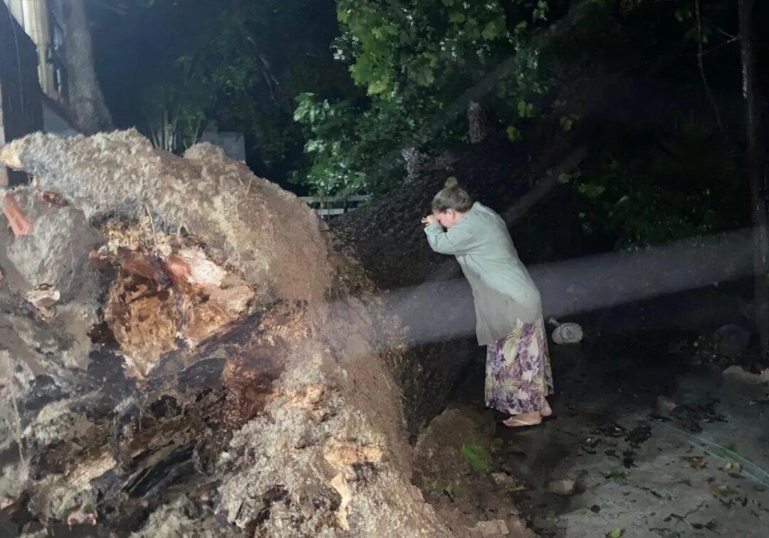 Mujer llora árbol de 100 años que Hanna tiró en Monterrey