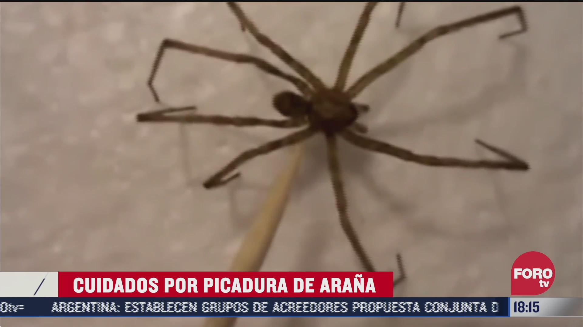 existen mas de 2 mil especies de aranas en mexico