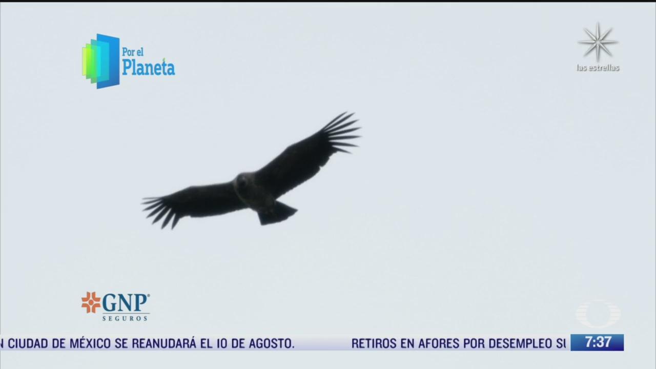 parque nacional torres del paine habitat de decenas de aves