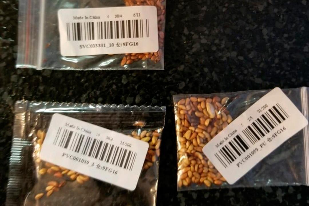 Las semillas provenientes de China han llegado a residentes de Estados Unidos y Reino Unido