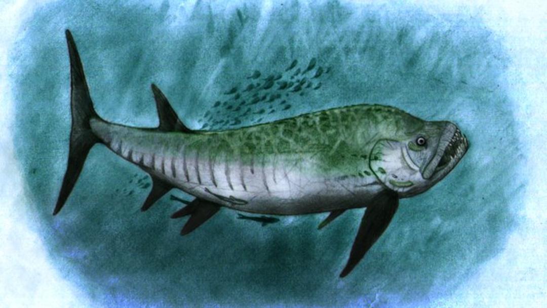 Encuentran fósil de pez gigante que convivió con dinosaurios hace 70 millones de años
