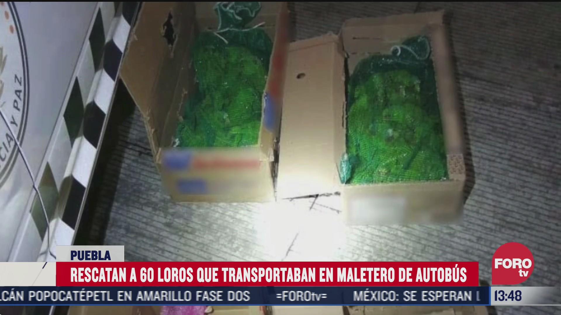 rescatan a loros que eran transportados en un autobus