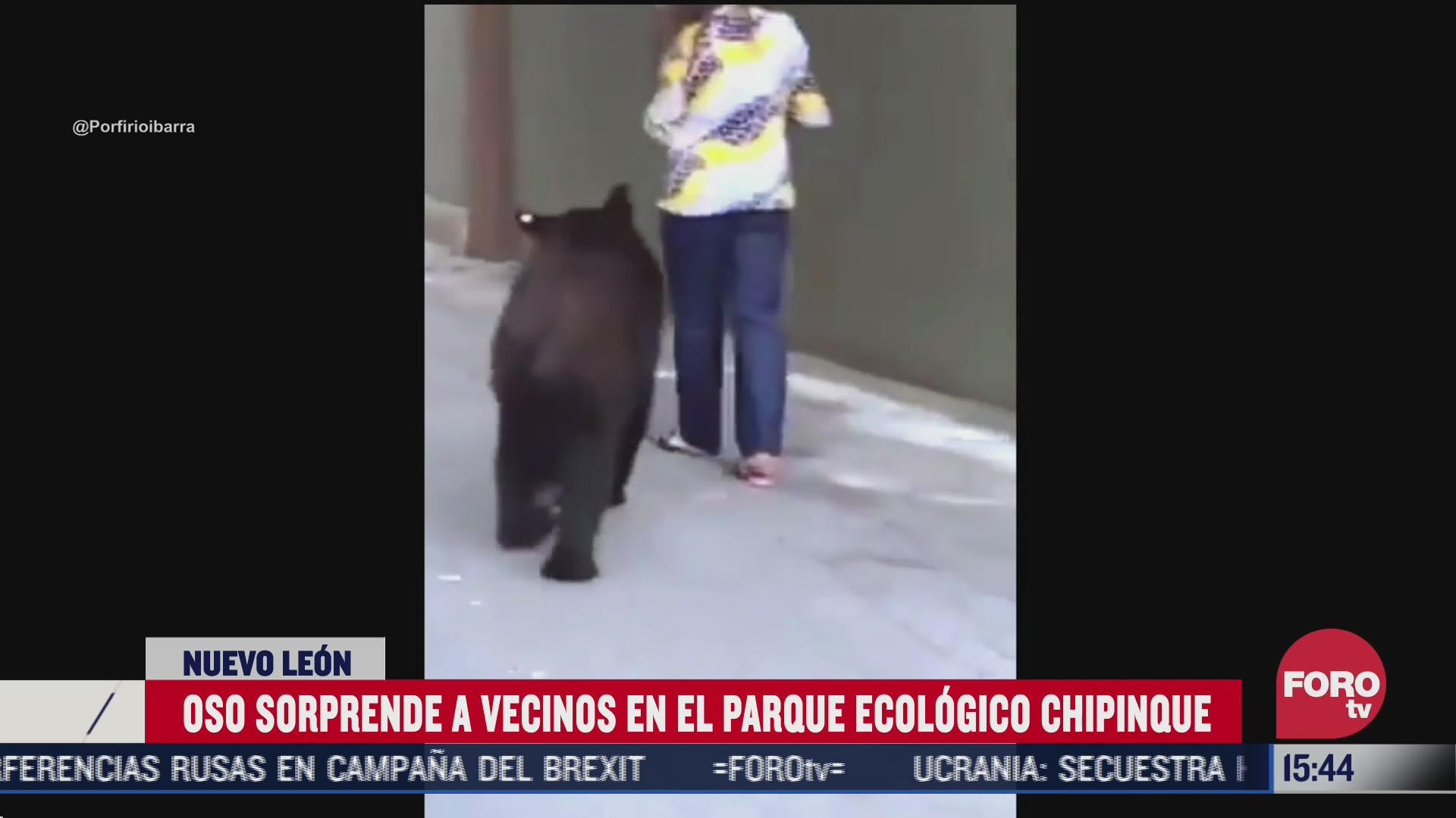 revelan nuevo video del oso del parque chipinque