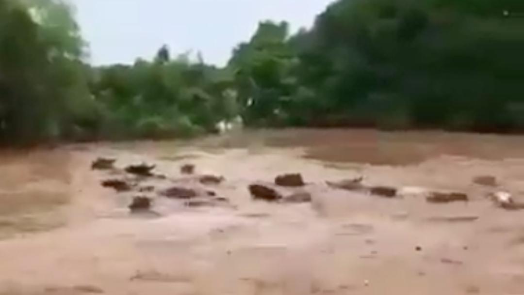 Río se desborda por Huracán Hanna y arrastra animales