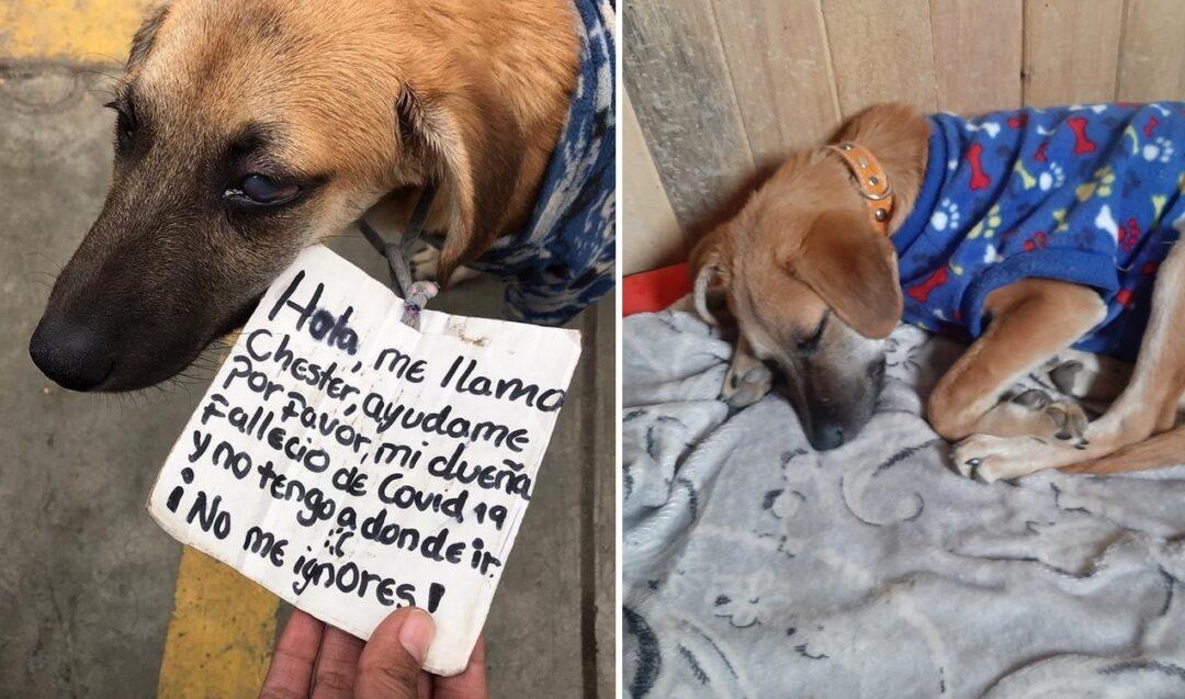 Buscan hogar para perro, su dueña falleció por Covid-19