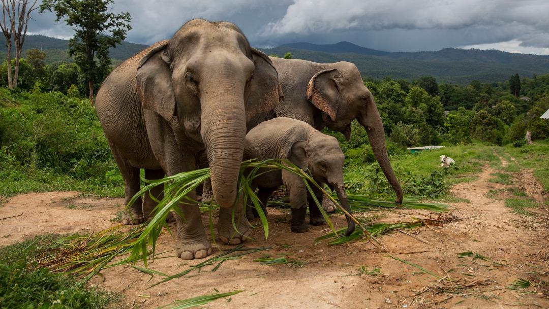 La ONG The Wild is Life Trust se dedica a rehabilitar a elefantes huérfanos para dejarlos en libertad en el bosque de Pandamasuie