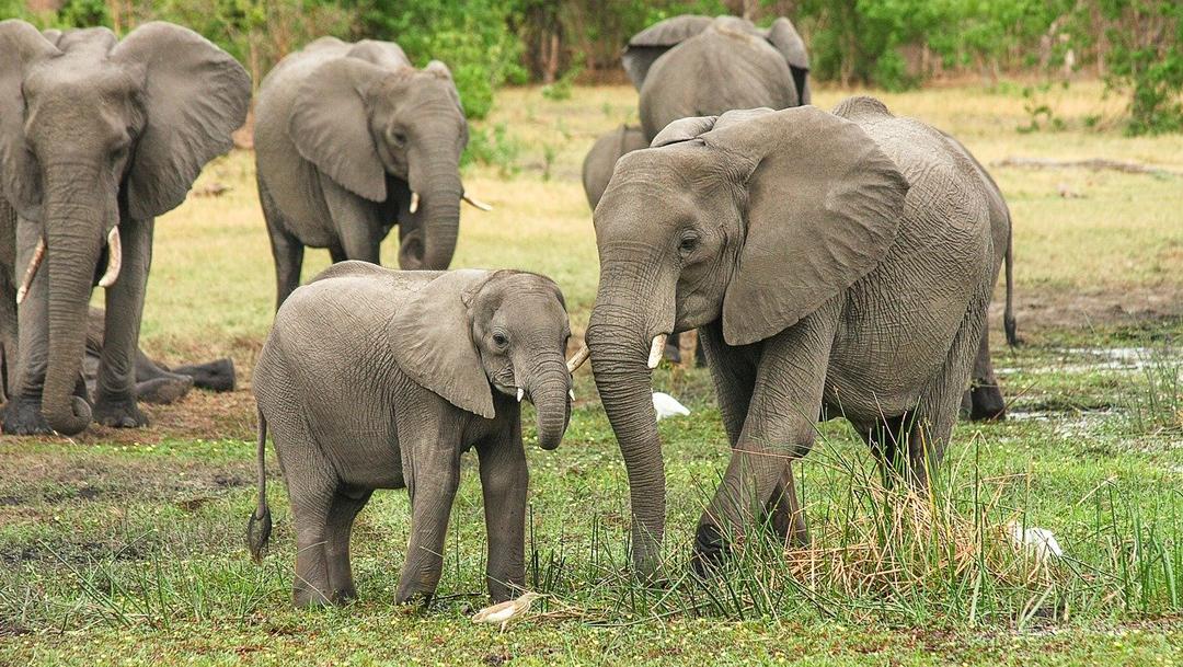 Han nacido 140 crías de elefante en el Parque Nacional de Amboseli en Kenia debido a la pandemia de Covid-19