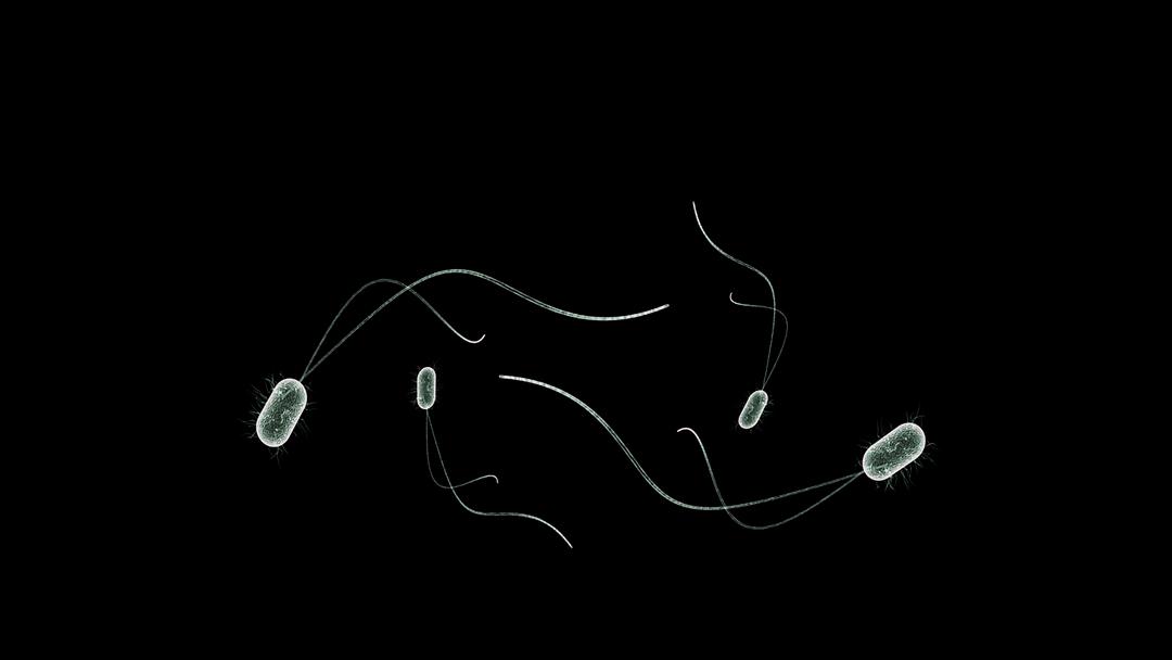 Microbios del subsuelo son capaces de producir energía sin respirar
