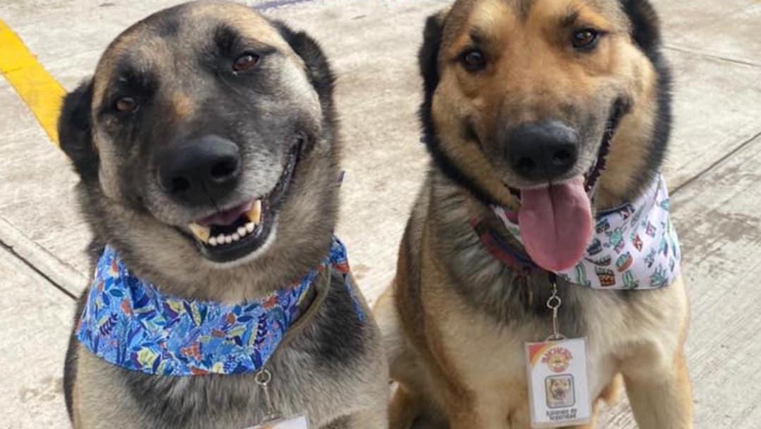 La adopcin de perros aument un 200 durante la pandemia
