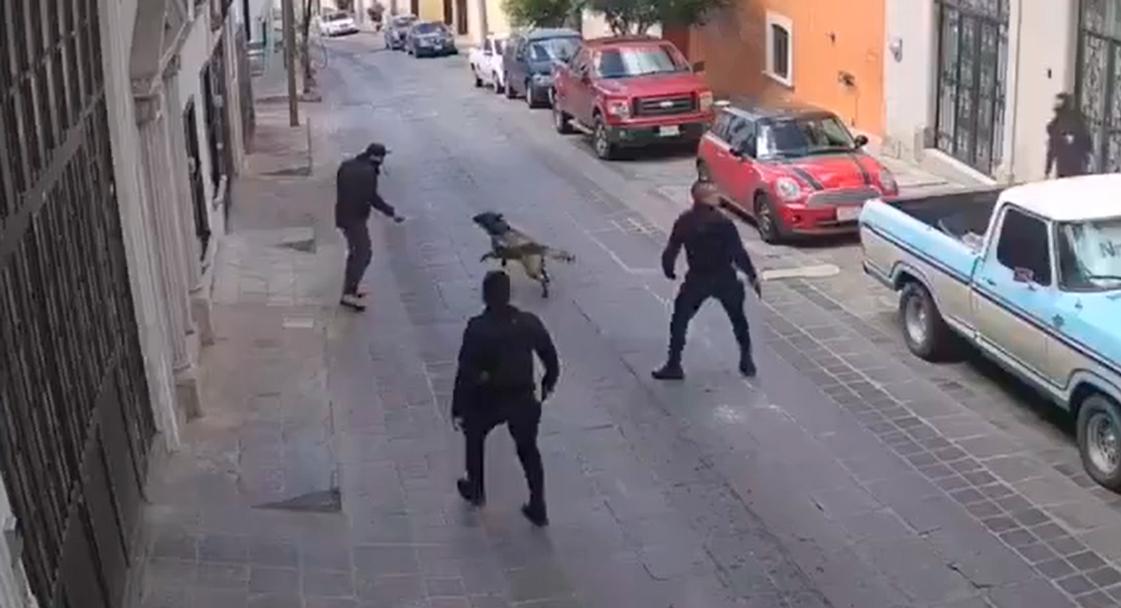 Perro policía Rocko regresa a sus actividades en Zacatecas