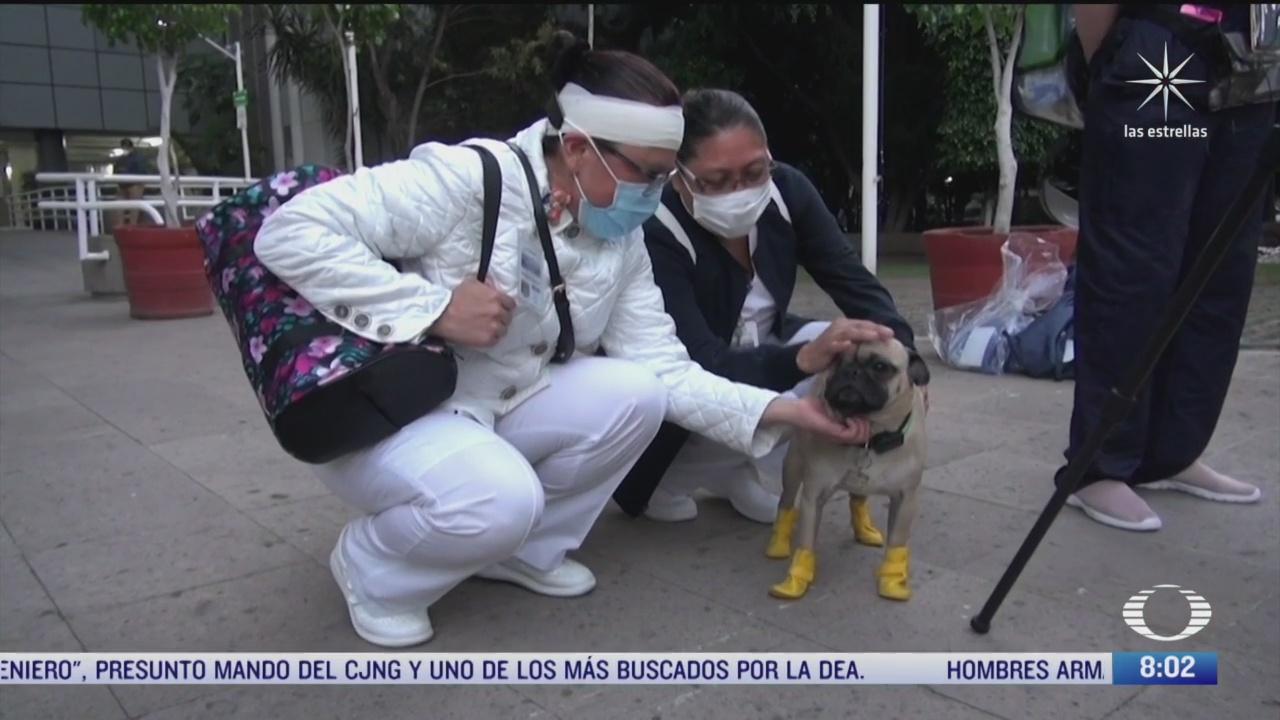 terapia canina para medicos que tratan a pacientes con covid
