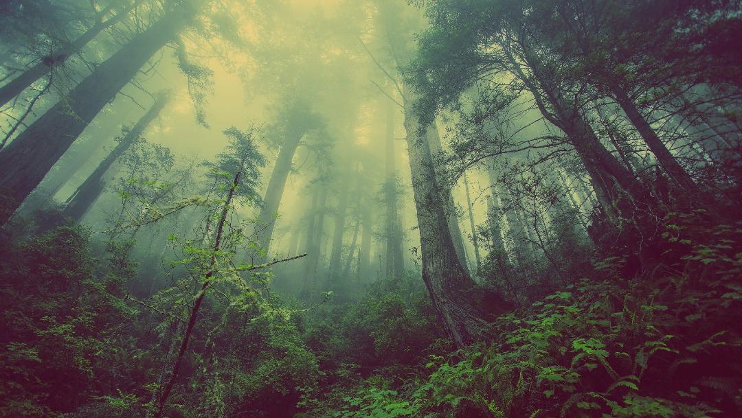 Se ha demostrado una relación entre las tasas más rápidas de crecimiento de árboles y el acortamiento de su vida útil, especialmente en plantas coníferas adaptadas al frío