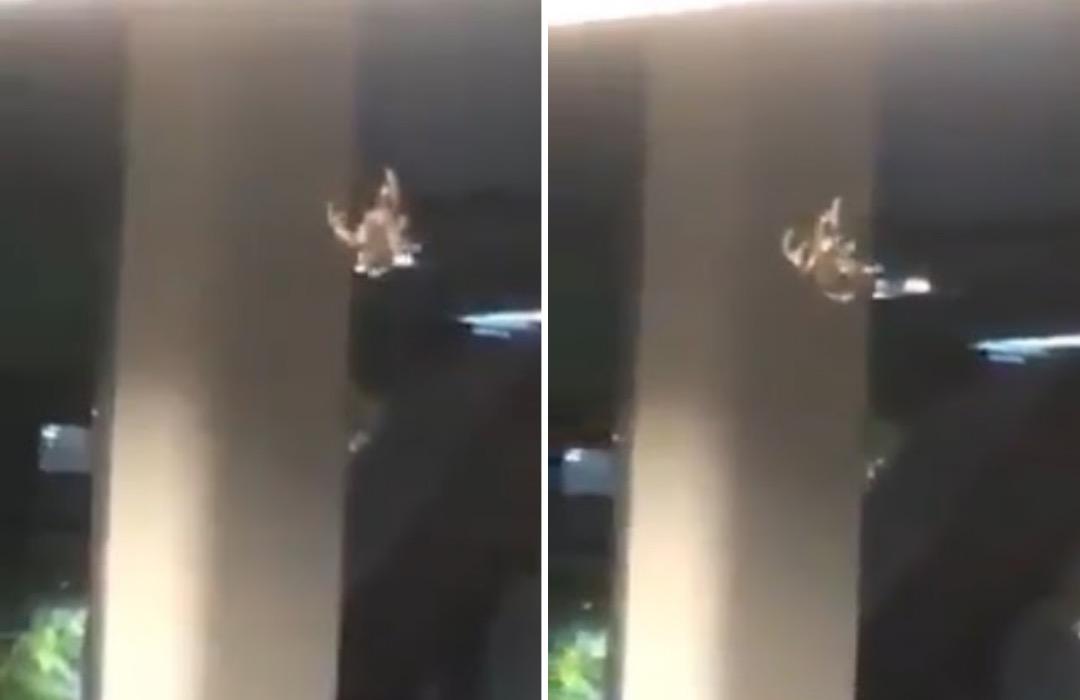 """""""Araña gigante"""" columpiándose en el Metro de CDMX: Video"""