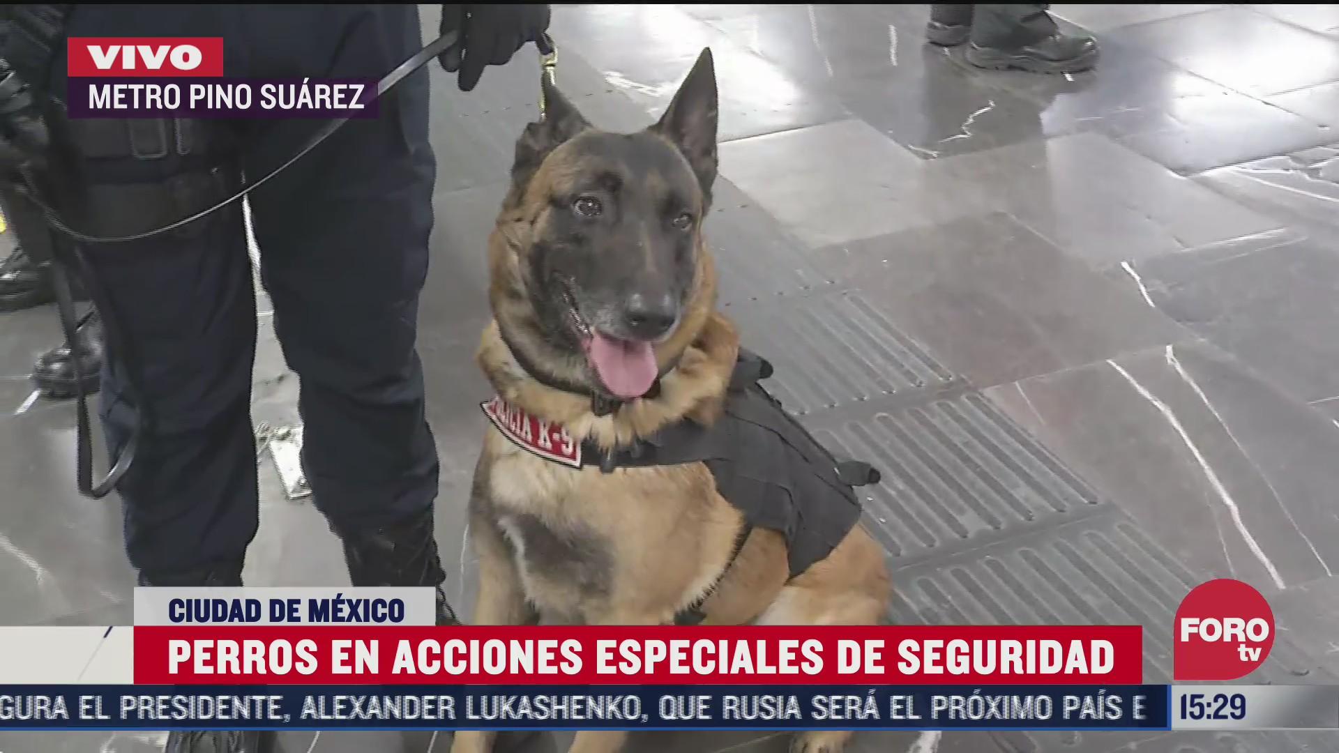 catorce perros se suman a las labores de vigilancia del metro de la ciudad de mexico