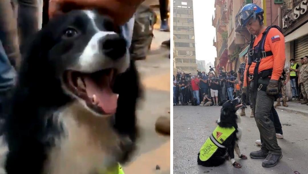 Flash perro rescatista devuelve la esperanza a Beirut