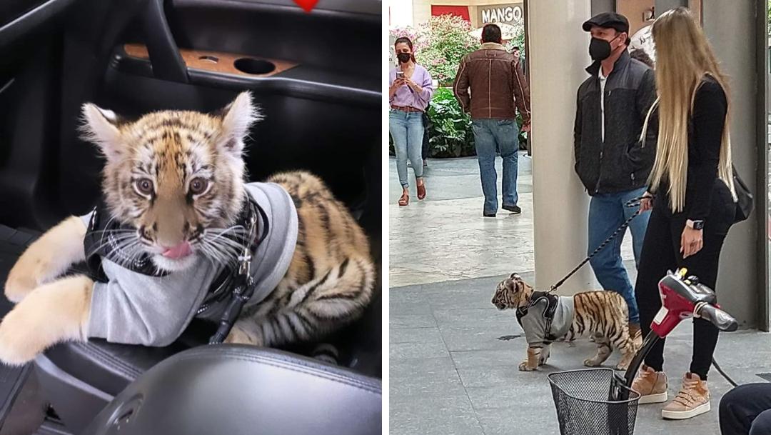 Captan a mujer paseando a cachorro de tigre en centro comercial de CDMX