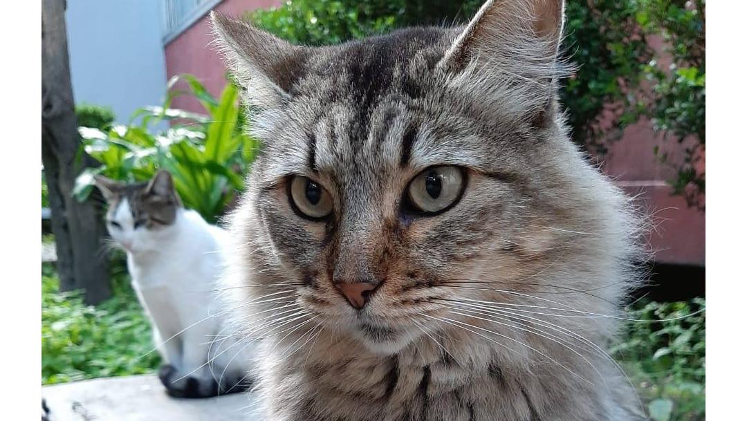gato, Tlatelolco, muerte, perros