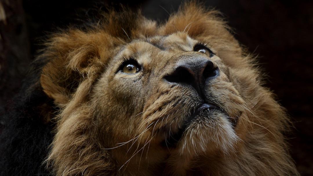 4 de octubre, Día Mundial de los Animales