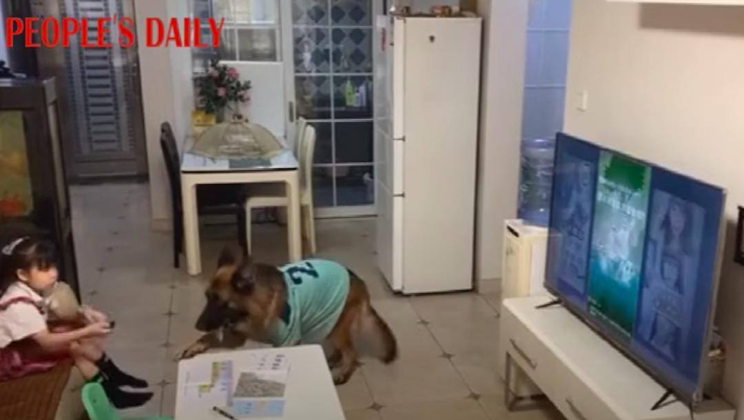 Perro alerta a niña sobre la llegada de su papá