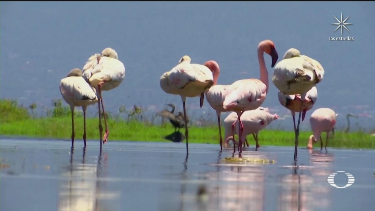 Flamencos regresan al Lago Nakuru, en Kenia