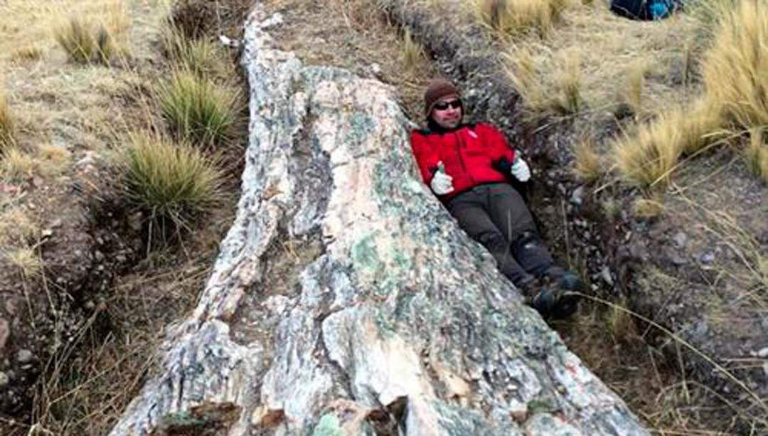 El cambio climático quedó registrado en un árbol de los Andes en Perú