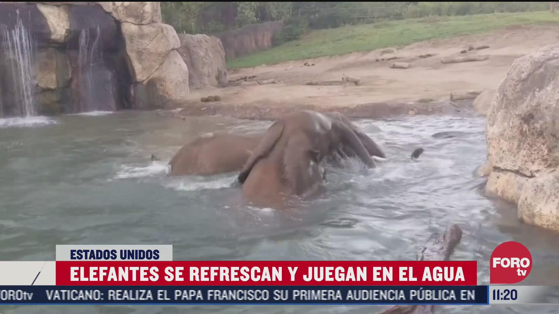 tiernos elefantitos causan sensacion por juguetear en agua