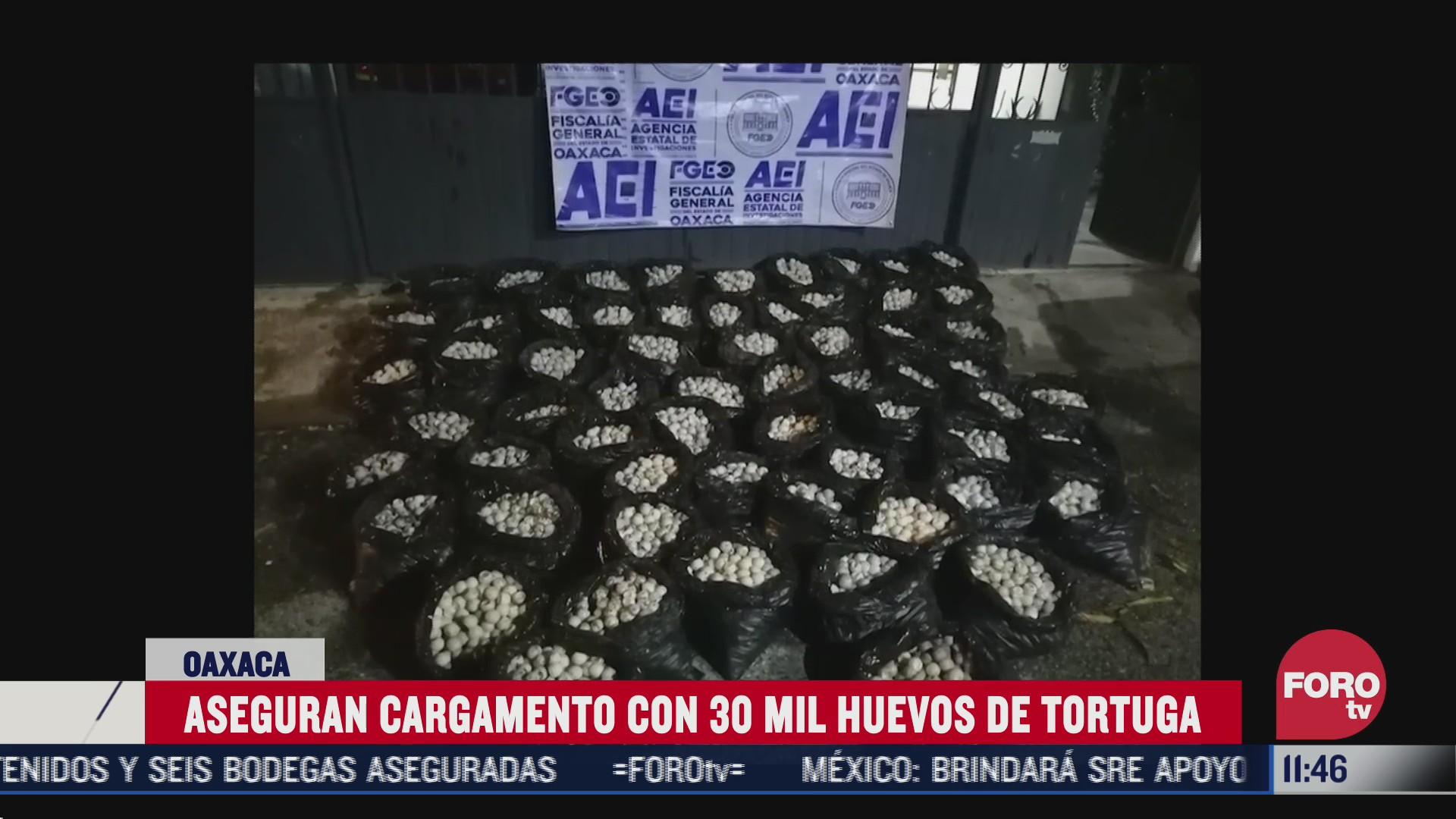 autoridades federales aseguran cargamento con huevos de tortuga en oaxaca